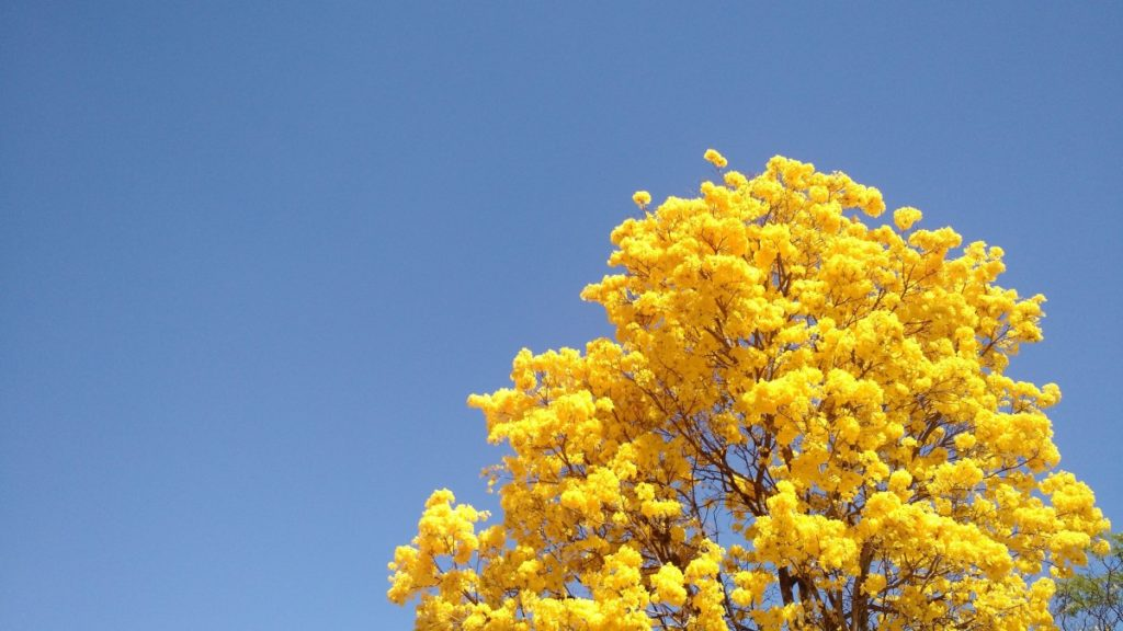 tree_ip_spring_yellow_sky-815169.jpg!d